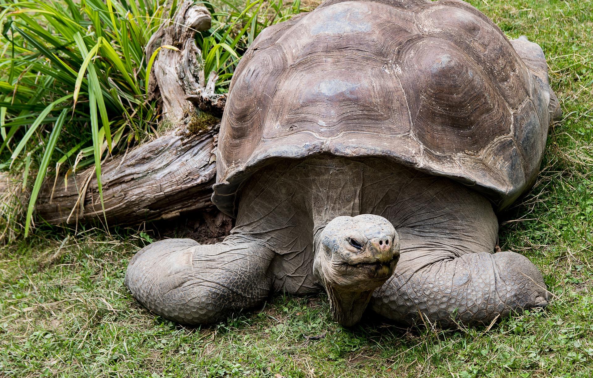 turtle-3555358_1920